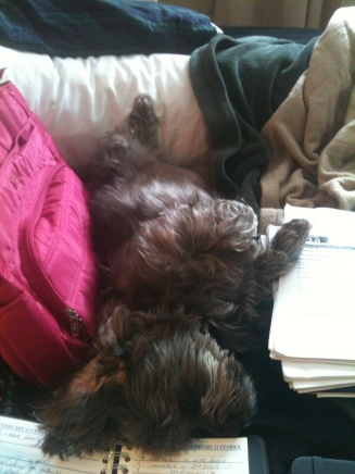 Like most dogs, Dora will take advantage of any available napping space!
