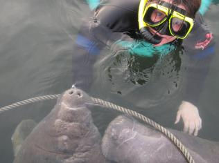 Meeting the Manatees