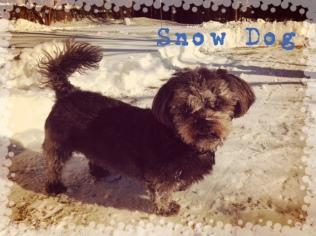 Dora LOVES the snow!