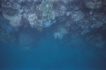 """The actual picture of my encounter with the """"drop off"""" on the Great Barrier Reef. Can you find Nemo???"""